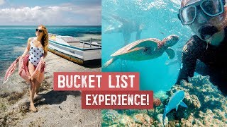 FINALLY Visiting The GREAT BARRIER REEF! You HAVE to See This in Australia (Sharks, Turtles & More)