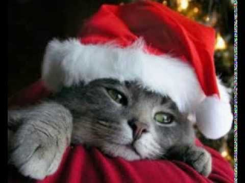Auguri Di Buon Natale Su Youtube.Auguri Di Buon Natale Bastardi