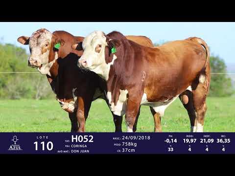 LOTE 110 - TAT H052, TAT H110