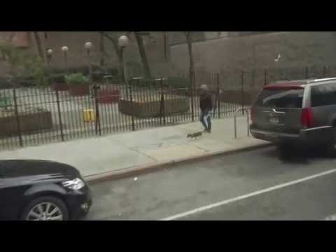 New York Person Walking a Dog