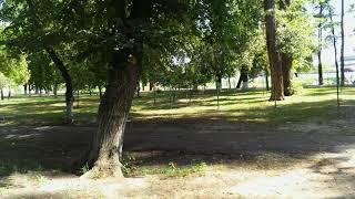 Парк и жилище черных свинок