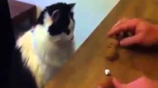 Bu Kedi Tam Bir Kumarbaz