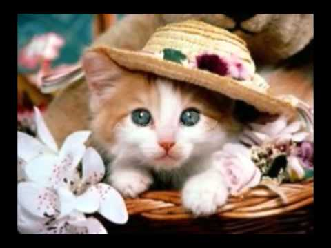 Cute white kittens in a basket - YouTube