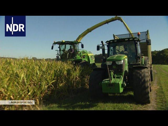 Herbst im Norden: Maisernte unter Hochdruck   die nordreportage   NDR Doku