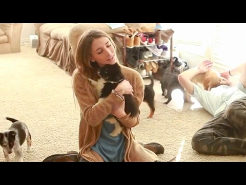 Husband Surprises Wife With House Full Of Puppies