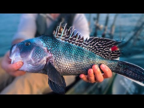 EPIC FISHING DAY - Nonstop Inshore Action | Field Trips Rhode Island