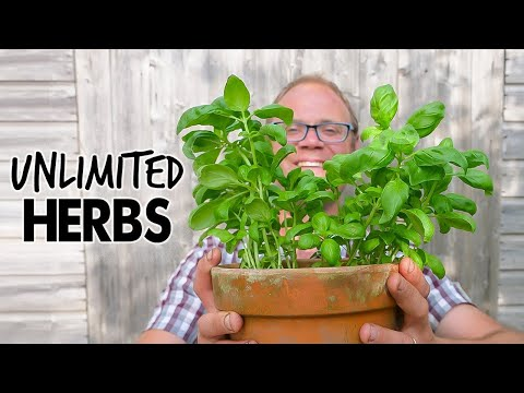 Grow Endless Herbs! 🌿🌿🌿🌿