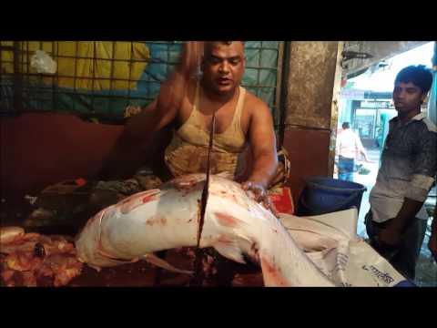 Fish Cutting | Two Big River Yellowtail Catfish Cut Into Chunk By Fishmonger