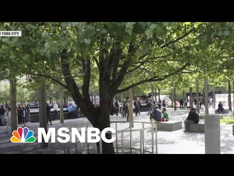 Tree That Survived 9/11 Becomes A Symbol Of Resilience