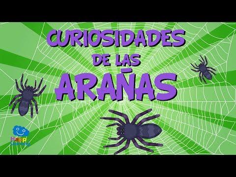 Curiosidades de las Arañas | Videos Educativos para Niños.