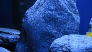 Doku Einrichtung Malawi Aquarium