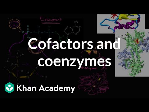 Enzyme cofactors and coenzymes | Biology | Khan Academy