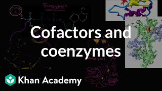 Enzyme Cofactors And Coenzymes