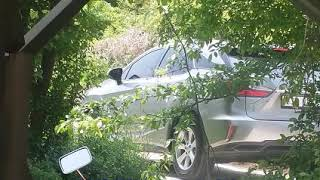 차를 세우고 집 건너편에 숲에서 무엇을 하고 가나? 2…
