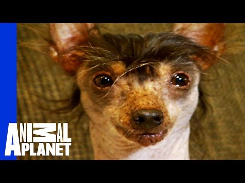 The World's Ugliest, Most Loveable Dogs!