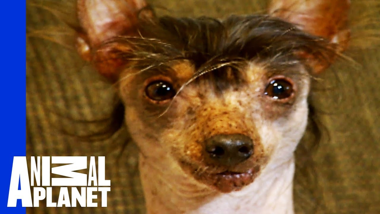 The World's Ugliest, Most Loveable Dogs! - YouTube