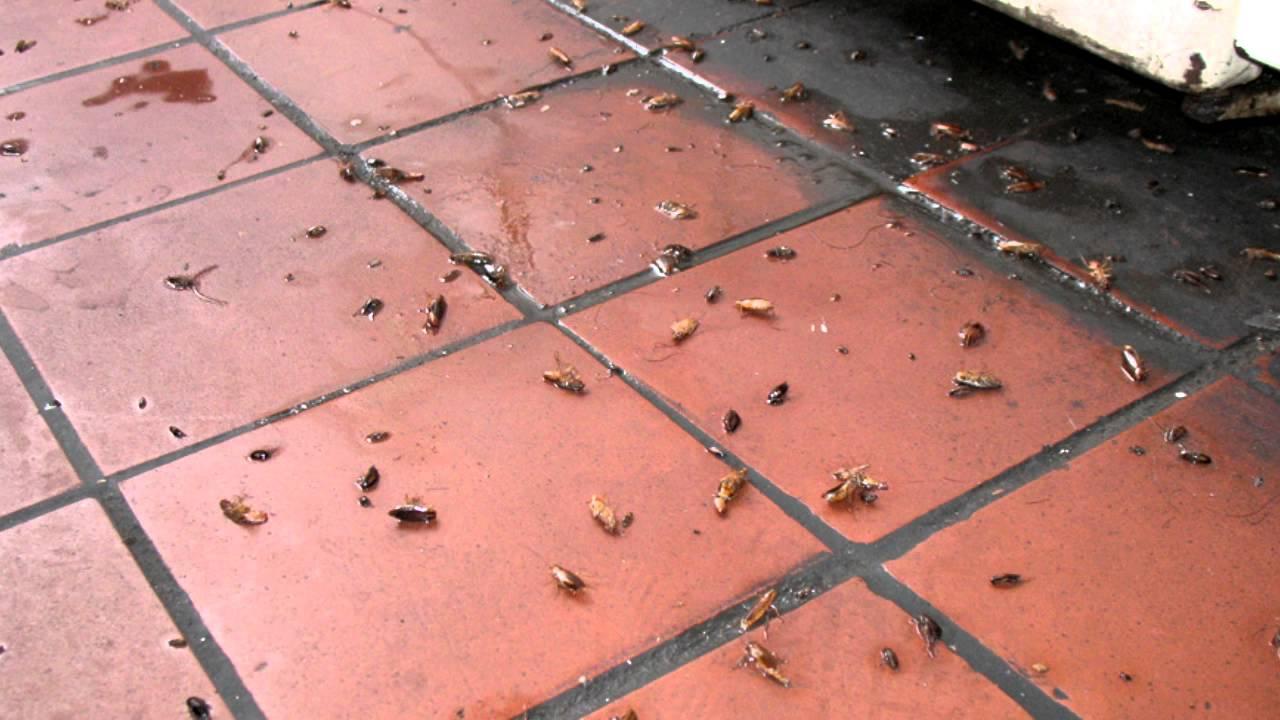 Как избавиться от тараканов в квартире? - YouTube
