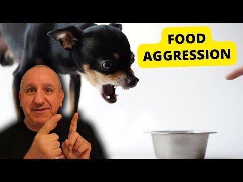 How to teach a dog impulse control
