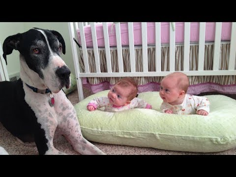 Great Dane and Baby Compilation 2017