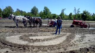 Mules pulling Farmal out of mud. 1
