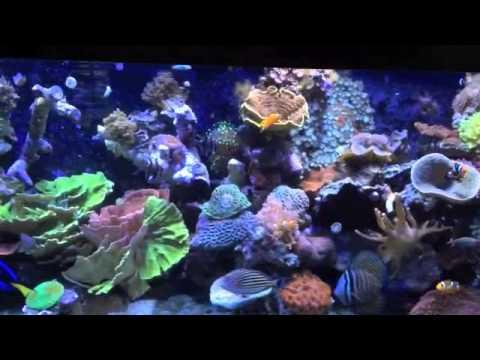 Living Reef Aquarium   265 Gallon