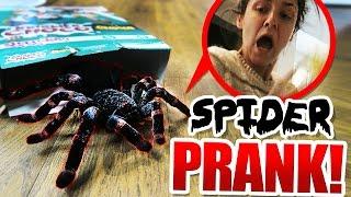 SPIDER PRANK!