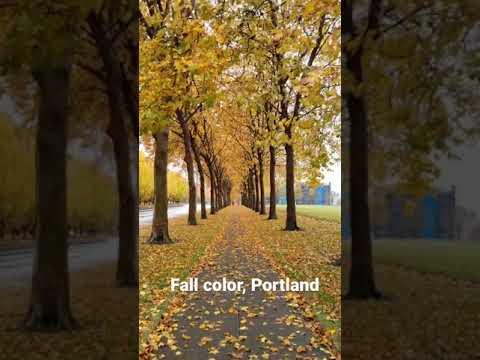 Fall Color, Portland, Oregon