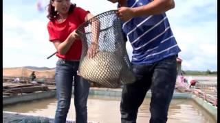 Thu Nhập 6 Tỷ/Năm Nhờ Nuôi Cá Chép Giòn - Sinh ra từ làng, Nguyễn Thế Phước