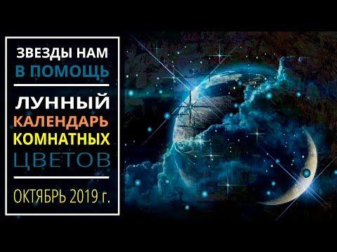 Октябрь 2019 г. | Лунный календарь комнатных растений