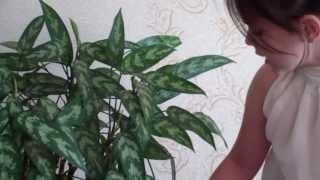 Уход за комнатными растениями во время отпуска(Как перенести с помощью ткани воду из одного сосуда в другой или как организовать полив комнатных цветов..., 2013-06-27T17:44:29.000Z)