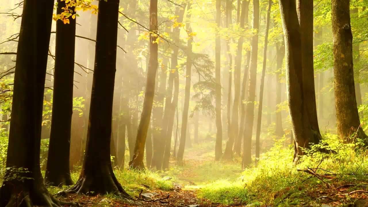 Bosques Mas Hermosos Del Planeta Hd Youtube
