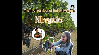 The mother river of better lives (II): Ningxia