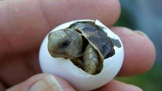 Sea Turtles Virginia.......Awesome stuff!