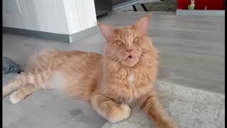 Интересно почему Корм для кошек в Болгарии дороже, чем в Германии?