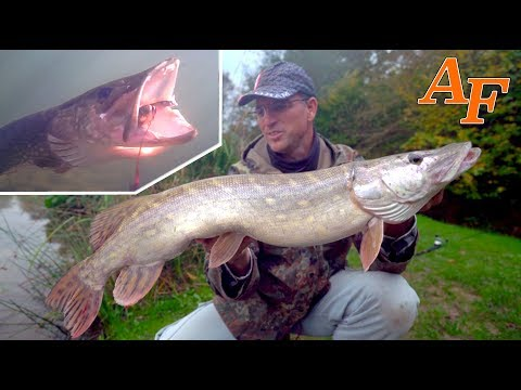 Best Big Pike fishing day ever Ft Carl & Alex Fish Water Wolf Pike UW Footage UK England EP.381