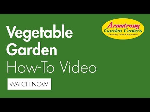 How To Plant A Summer Vegetable Garden - Armstrong Garden Centers
