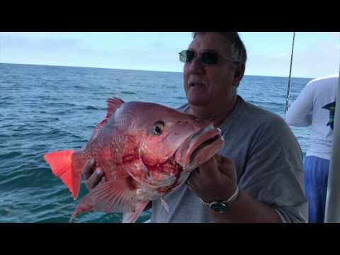 Big Red Snappers v.2 - Sea Love Charters - St Augustine, FL