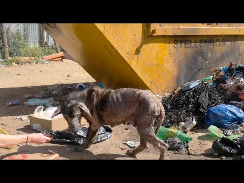 Feral Dog Makes An Incredible Comeback!