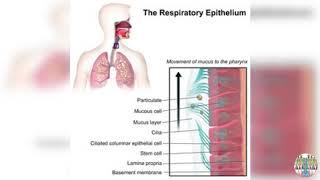 Protegez vos muqueuses nasales...