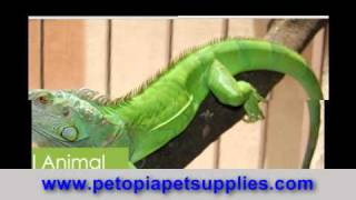 Pet Expo, Aquarium Plant Care, Aquarium Plants, Plastic Fish Bowls