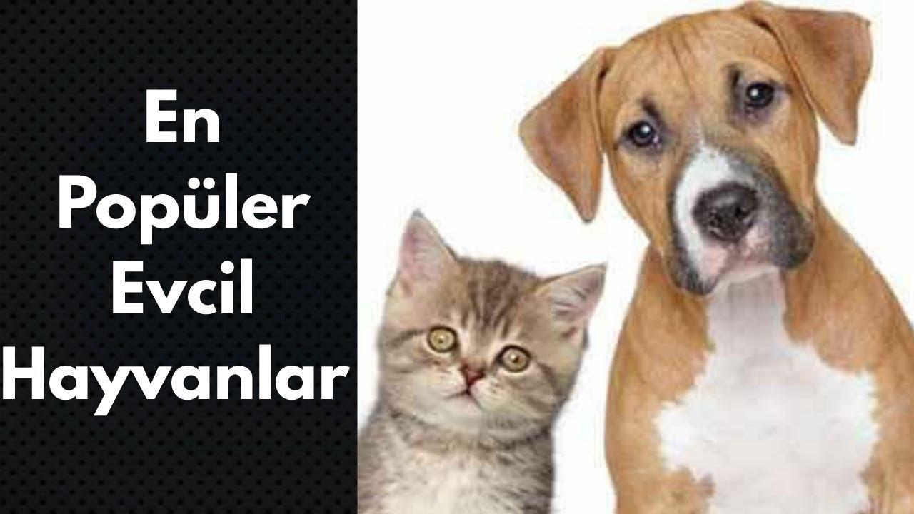 En Popüler Evcil Hayvanlar