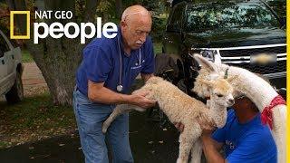 Dr Pol na okrągło - oglądaj codziennie na Nat Geo People