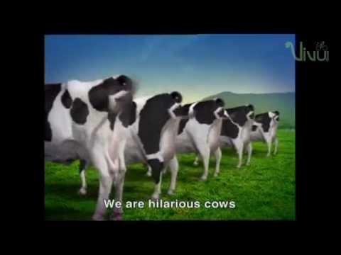 Quảng cáo Vinamilk – Đàn bò vui vẻ [ Happy Cows Vinamilk 100% fresh milk ]