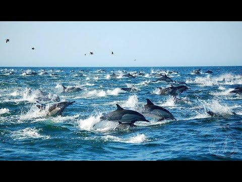Tour y delfines en las Islas Marietas!