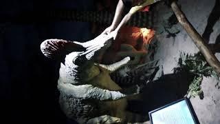 Dinosaur world in science center Delhi