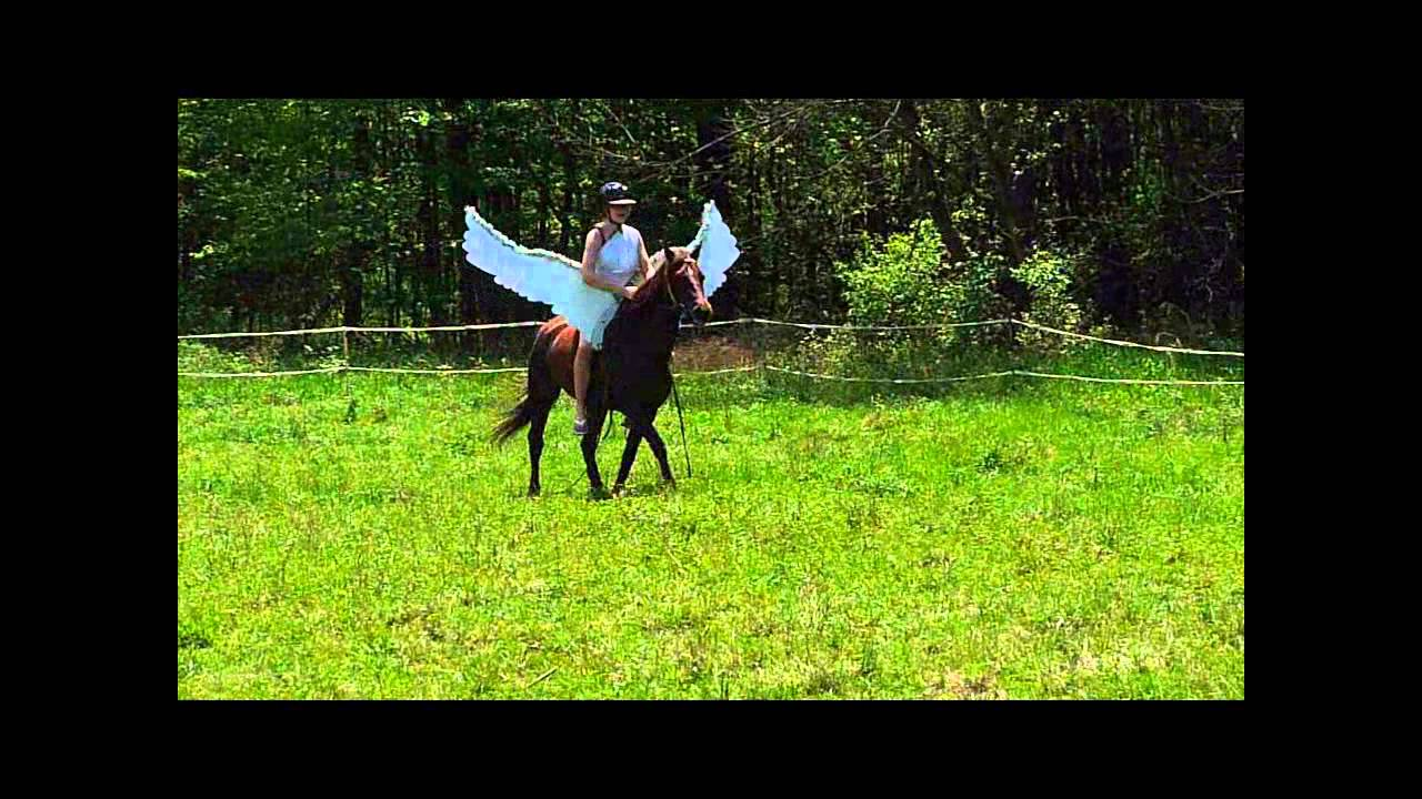 Pegasus my horse with wings sceneswmv youtube solutioingenieria Image collections