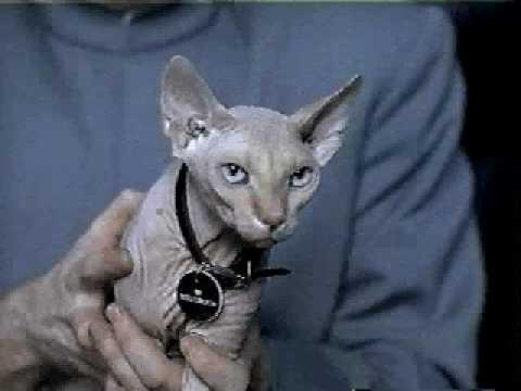 Evil Cat Youtube Video