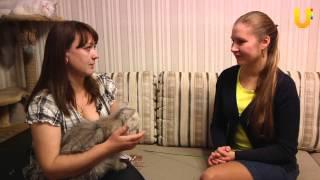 Глазами животных, выпуск 56. Персидские кошки, кот Гонза.