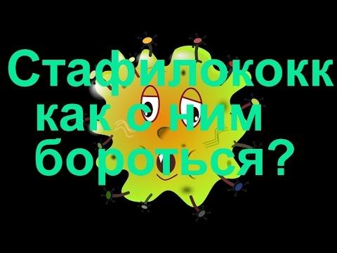 Staphylococcus и верхние дыхательные пути… Cтафилококк