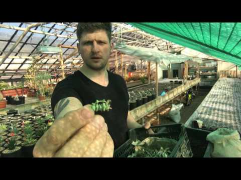 Самый быстрый способ посадить садик из суккулентов